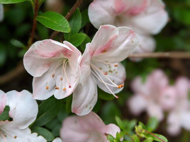5月28日から1泊2日で湯河原へ。5万本のサツキが咲き誇る湯河原町星ヶ山公園の「さつきの郷」を鑑賞後、南郷山へハイキング。下山後は、温泉とイタリアンのマリアージュが人気のオーベルジュ湯楽に投宿します。