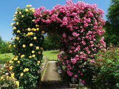 「ぐんまフラワーパーク」のバラ_2021_花は残っているが、見頃は過ぎています(群馬県・馬橋氏)
