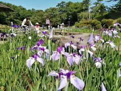 岡崎東公園の菖蒲まつり&小呂池,小呂湿地散策