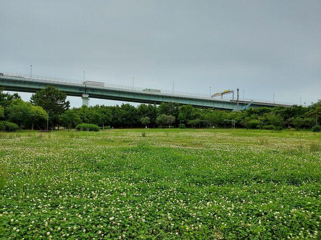 ディスカバリーご近所 工業の町尼崎に、広大な森ができる!100年後が楽しみです(^-^)尼のパナマ運河もついでに見に行く!