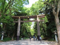 150年計画の都会の森☆オオタカが頂点に立つ明治神宮の森