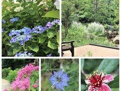 宝塚市の癒やし空間「花のみち」の**紫陽花**と「文化芸術センター」の庭園
