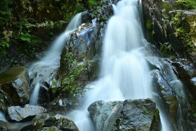 前回、「ショボい滝と言うなかれ、条件が悪かった女滝」(https://4travel.jp/travelogue/11644711)で予告した通り、今回はそのリベンジです。<br />前回は、林道側から降りるのを断念し、上流側から滝つぼを眺めて帰り不完全燃焼でした。<br />今回は、正攻法で崖をロープで下ろうと考えました。<br />どこらにロープを固定しようかと周辺を散策しているとふとそのまま降りれそうな道筋が見えて来ました。<br />片足が乗る位の隙間から周辺の岩をジグザグに降りて行くと思ったよりも簡単に滝の下までアクセスできました。<br />案ずるよりも産むがやすしというか、前回の苦労は何だったのか。<br />ロープが必須と思っていただけに拍子抜けしてしまいました。<br />下から眺める滝は、中央の岩で左右に分断されていて中々珍しい感じでした。