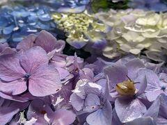 紫陽花を見にあじさいで有名な岩船寺へ
