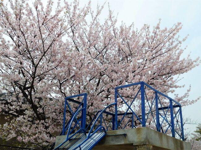 西岐波にある小学校に行ってみました。<br />昔…私が通っていた学校です。<br />卒業して・・・・半世紀・・・。<br /><br /> 建物は新しく変わっています。<br />当時運動場に大きな桜がありました。<br />今もありますが、あの時私が見た桜?<br />もう何十年もたっており、まだ残っているのかな???と思いました。<br /><br /> 帰りは床波の海を見ました。
