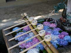 20210610-1 京都 藤森神社まで紫陽花観に。こちら、馬のお宮さんやねんね。