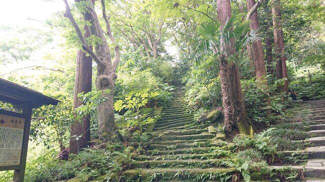 鎌倉に瑞泉寺の『苔の階段』とアジサイを観賞のため観光。JR鎌倉駅から瑞泉寺までの往復の間に色々な観光スポットと鎌倉のアジサイに出会いました。<br /><br />写真の枚数は多いですが、主にアジサイの写真ですので流し読みしてお楽しみ下さい。<br /><br />スケジュールは次のとおりです。<br /><br />13:30 鎌倉駅に到着<br />13:40 小町通り<br />13:50~14:25 ランチ <br />14:30 鉄の井、鶴岡八幡宮<br />14:45 源頼朝公顕彰碑、白幡神社、<br />15:05 永福寺跡<br />15:15 瑞泉寺<br />15:30~15:50 瑞泉寺庭園<br />16:20 杉本観音前<br />16:30 浄妙寺<br />16:40 歌の橋、二階堂橋、荏柄天神社(えがらてんじんしゃ)<br />16:50~17:10カフェ休憩 お店「おりぜ」<br />17:25 鶴岡八幡宮<br />17:50 小町通り<br />17:55~18:40 夕食 お店「キャラウェイ」<br />18:55 JR鎌倉駅<br />