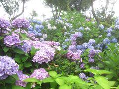 白山神社のあじさい と 小石川植物園散策