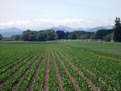 日本の北の果てまで行ってやるぅ  9  広々とした牧場、畑を縫って走って、庭園めぐりの帯広