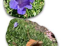 絶景&美食のタスマニア&メルボルン【最終日】ジャカランダの花咲く麗しのメルボルン
