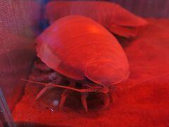 仙台うみの杜水族館ではいろいろな水辺の生き物にも会えます.