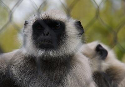 車で宇部まで6時間かけていくのだからしっかり見なくてはいけません。<br />とゆうことで、2泊3日の3日間ずっとときわ動物園にいました。<br />飼育員さんはもちろん、サルにも3日連続は覚えてもらえます(笑)<br />とても素晴らしい動物園でした。<br />ハヌマンラングールは日本ではときわ動物園だけにしかいません!<br /><br />1日目は直接動物園へ閉園後ホテルへスーパーマーケットで買い出し。<br /><br />2日目は朝宇部空港により、9時に動物園へ行き閉園まで見てときわ公園を少し見てからホテルへ<br /><br />3日目は朝ときわ公園を散歩して、植物園を2時間ほど見学してから動物園へ行き閉園後帰路へ夜中に家に着く。<br /><br />とゆう日程の為<br />①動物園編 と ②その他編 に分けました。