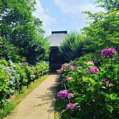 シニアトラベラー!紫陽花咲く本土寺満喫の旅