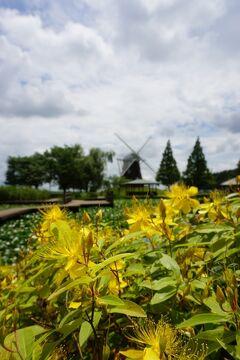 梅雨の晴れ間に楽しむchocoのお散歩♪ 柏・あけぼの山公園、関東三大弁天・布施弁天、白鳥と遊ぶ手賀沼