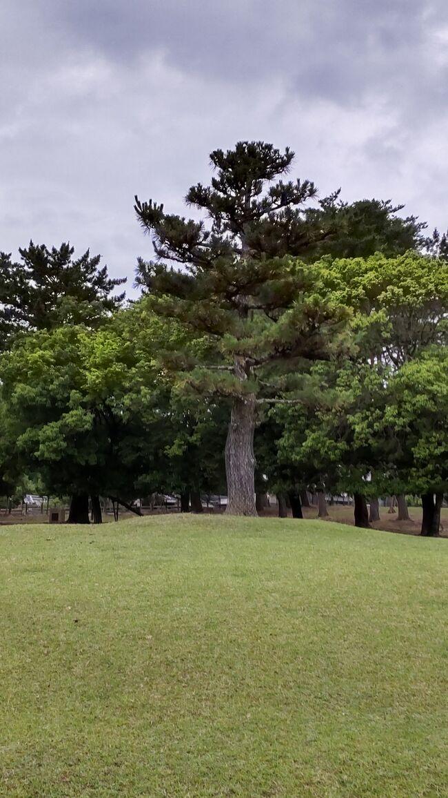 今の季節、奈良公園で天然ホタルが見れる事を知り、早速見に行く事に。蛍を見るならマレーシアと言われて見に行った時、これ以上の体験はないだろうと言うくらいの感動がありました。小さなボードに乗りマングローブの森を回るスタイルはタイにもありますがショボすぎて。<br />されど、奈良公園の大仏蛍は数も30匹から40匹くらいですが情緒があります。