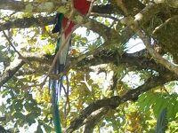 モンテベルデの穴場 Curi-Cancha保護区を満喫