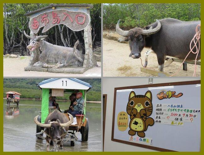 沖縄離島巡り2015(6)西表島から水牛車で海を渡って由布島へ