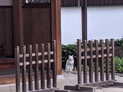 白猫さんに会いに、傳通院へ
