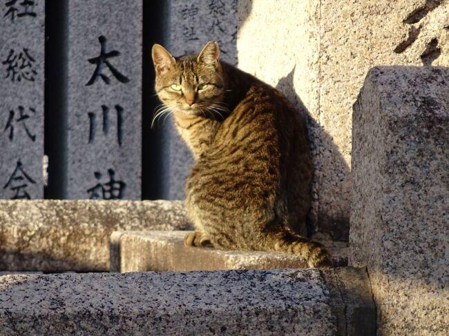 日本書紀によれば、厩戸皇子は用明天皇の池辺双槻(いけのへの・なみつきの)宮で生まれ、宮殿の南の上宮(かみつみや)で少年期を過ごしました。<br />その後しばらく音沙汰なく、次に登場するのは<br />★用明2年(587年)秋7月、<br />蘇我馬子宿禰大臣は、諸皇子と群臣とに勧めて物部守屋大連を滅ぼそうと謀った。泊瀬部皇子・竹田皇子・厩戸皇子(中略、皇子計5人、群臣5人)らが、一緒になって軍勢を率い、大連を討った。★<br />厩戸皇子13才または14才です。<br />現代では青春というには幼いですが、当時ではそろそろ大人の仲間です。<br />仏教伝来にともなう宗教戦争、丁未(ていび)の乱の勃発です。排仏派の物部守屋の本拠地河内国へ、崇仏派の蘇我馬子率いる連合軍が攻め込んだのでした。厩戸皇子は馬子連合軍に加わりました。<br />書紀の書き方、年齢からいって、最初はその他大勢の一人という感じです。<br />でもこの事件は厩戸皇子の青春を彩る一大イベント、現大阪府八尾のあたりの古戦場をたどります。<br /><br />六国史および参考書については、「六国史の旅 厩戸皇子1」をご覧下さい。<br />引用に際し僭越ながら敬称を略させていただきます。<br /><br />4トラベルのブログは初投稿日順に並べることができません。<br />この旅行記は2020年6月23日~7月1日、11月14日~23日の2回の旅の記録ですが、初投稿日順に並べるために、12月1日以降の旅行日とします。<br />
