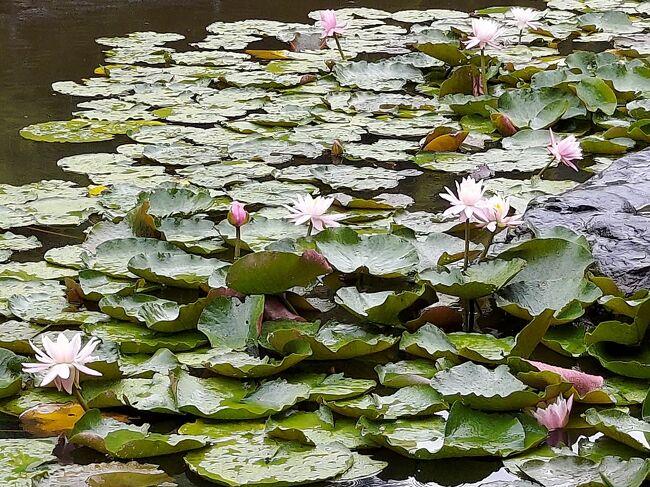 ディスカバリー近所 尼崎のアジサイの名所!元浜緑地を傘さして`ヽ、个o(^-^)`ヽ、`ヽ、
