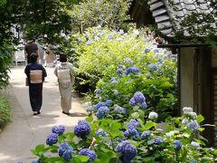 紫陽花求めて鎌倉へ♪~2日目(2)、明月院・東慶寺~