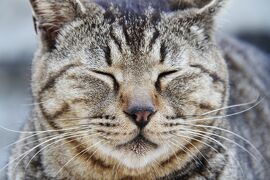J63. 四国の旅。猫の島男木島。