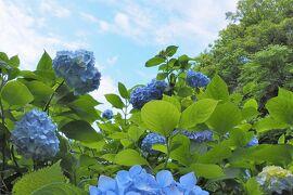 梅雨入り前の鎌倉でアジサイ散策 ~明月院~