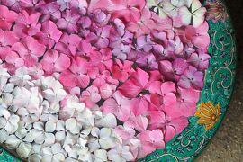 鎌倉でアジサイ散策 ~花手水がバージョンアップしていた一条恵観山荘~