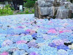 池に浮かんだ紫陽花『#あじさいうかべ』に魅かれて久安寺へ