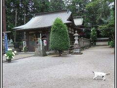 城跡、あじさい、猫と戯れて...... 川治温泉。