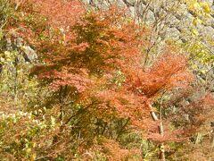 久しぶりに皆で摩耶山/森林植物園の紅葉を見に行こう
