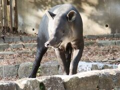 日帰りできる横浜の動物園2園に2泊2日(2)金沢動物園(前)昭和レトロななかよしトンネルや丑年にちなんだ写真展や展示からアフリカ区の動物など