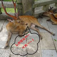 コロナ騒ぎ下の奈良飛鳥3度目