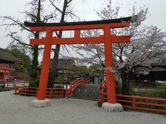 ほんわりあったかい京都へと(Part 4. やっぱり京都の桜といえばここ)