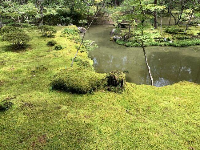6月の京都です。<br />京都の寺院はまだまだ参観していないところも多く、時間のあるときに、感染予防をしながら、回ってみることにしました。<br />西芳寺は苔寺で有名ですが、あの緑の苔一面の風景は息を飲みました。<br />参観者も少なく、静かな庭園を心行くまで堪能できました。<br />予約をして参観できますが、まず、写経を行い、心を静めます。<br />それも、初めての体験で、大変心に残りました。<br />梅雨の時期が一番美しいと聞いていたとおり、あの緑一面の情景は忘れることができません。<br />まるで時が止まったような感覚になりました。<br />緑のエネルギーを足元からもらったような気持ちです。<br />四季それぞれの美しさがあるとのことです。寒い時期にも行ってみたくなりました。
