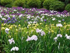 2021年6月 山口県 物見山公園に菖蒲を見に行きました。紫と白と黄色の花が咲いていました。
