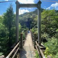 7歳子連れ ペーパードライバーの屋久島ネイチャーツアー  Day3 白谷雲水峡 苔むす森 昆虫ハンティング
