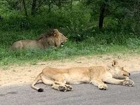 南アフリカ その2 クルーガー国立公園・一時帰国編