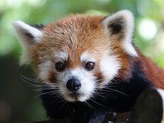 池田動物園 夏場の展示は判断が難しい・・・きなこちゃんに会いたくて朝一番に行きましたが会えませんでした