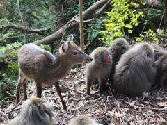 屋久島_Yakushima 洋上のアルプス!屋久杉だけではない、豊かな自然と食に出会える世界遺産の島