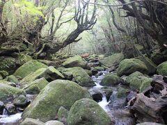 屋久島 白谷雲水峡_Shiratani Unsuikyo 『苔むす森』と『太鼓岩』!人と森林が手軽にふれあえる自然休養林