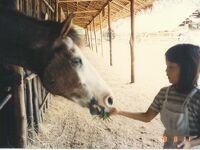 Thailand 古き良きおもひで (8/15)     カンチャナブリの乗馬キャンプ