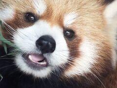 実に6年ぶりの上野動物園(後編)西園の小動物や世界のサルと東園のハシビロコウやキリンやオカピやカバたちや動物以外~レッサーパンダはラッキー!