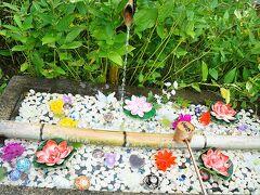 そうだ京都行こうと思い立ち・・・緑と花玉手水に癒される