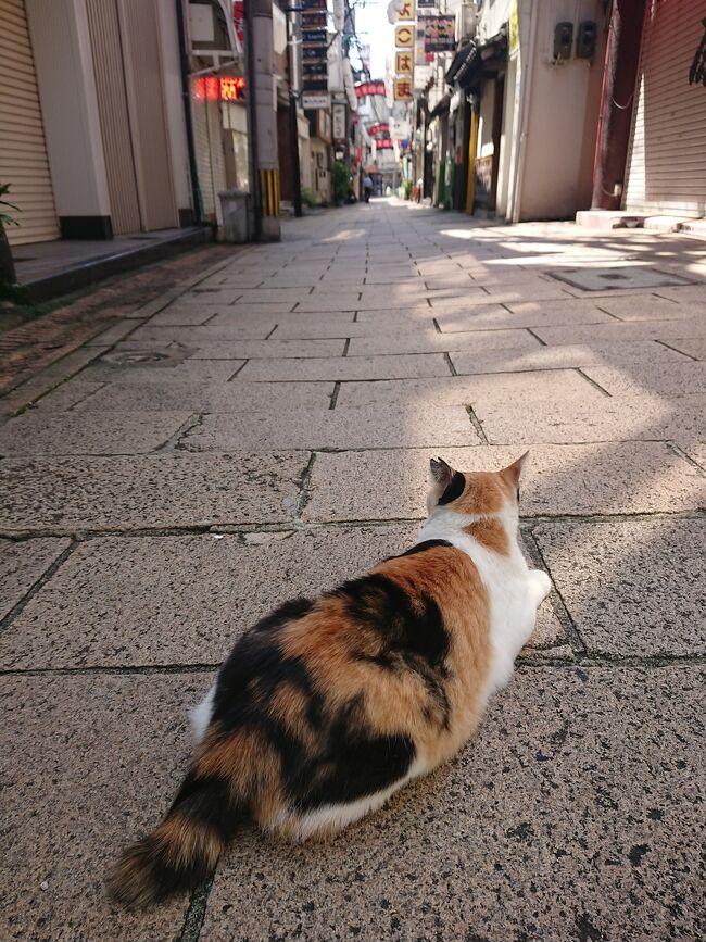 8月盆終わりすぐ、今回毎度の独旅です。幼少期家族で幾度か行った事あるが何を見たり食したり等の記憶が全く無い。五島列島にはさすがに親も連れてってないやろと思い長崎市街地含めふらっと5日間行ってきました。
