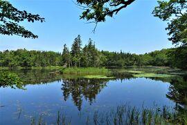 ヒグマの森へ-ネイチャー・ガイドと歩く、王道で楽しむ世界自然遺産【知床8日間 CREWG旅-5《知床五湖ハイキング編》】