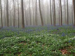 花のベネルク物語No.4<ブリュッセル郊外のブルーベルの森、ワーテルローの古戦場など>
