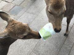 オタ活遠征の記録~京セラコンサートの翌日は、奈良まで鹿さんに会いに行って来ました。