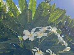 The Bay Club @ Waikoloa Beach Resort短期滞在 最終日