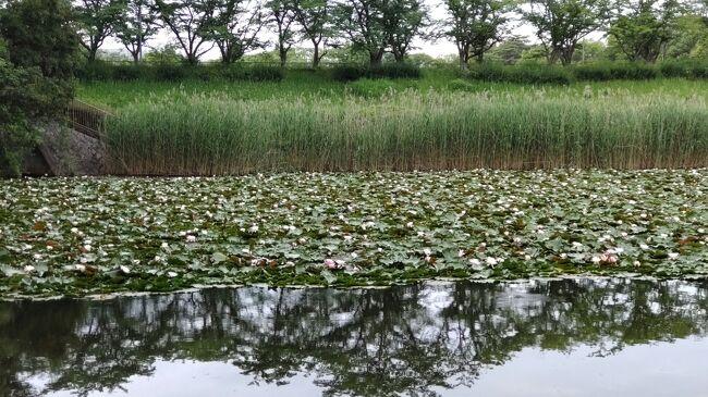 初めて訪れたのは6月13日(日)!平城第四神功池公園<br />大和西大寺駅から北の方面へ歩いて40分の所にあります。<br />お散歩しながらその時は睡蓮を見に行きました!<br />それから9月10日(金)、バンの雛がいるとの事ででかけてみました!<br />3回目は9月16日(木)、高の原から車でバンの雛の成長を見に行きました!<br />そして今日9月23日(木)!<br />自宅から車でバンの親子とカルガモの子供を見に行きました!<br />10月1日(金)今度は午前中に行きました。<br />動画をアップしました。YouTube<br /> https://youtu.be/Lz_AvQDpIO8